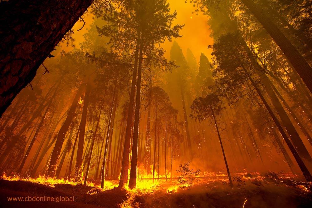 hemp construction california wildfires building fire retardant